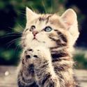 Puscat